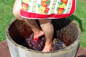 stock photo of stomp  - female stomps red grapes in wooden basket - JPG