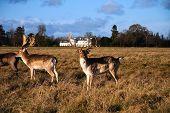 Deer in a Park