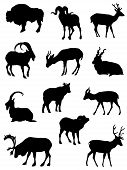 Collection of silhouettes artiodactyl