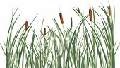 Reed and green grass background