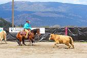 Cutting Horse Show