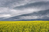 Stormclouds Over The Prairie