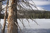 Frozen Lake in Yellowstone