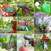 stock photo of wheelbarrow  - Composite image of nine photos of gardening themes showing plants and tools like shovels watering can wheelbarrow and other items - JPG