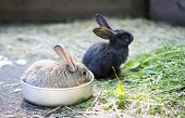 stock photo of wild-rabbit  - Two different rabbit at zoo cell for watch - JPG