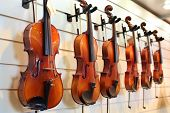 A number of violins hanging on the wall in the shop