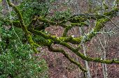 Green Moss On Tree Stocks
