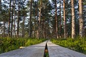 image of marshes  - Timber boardwalk in forest in marsh or bog in Estonia - JPG