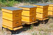 foto of bee keeping  - Some yellow beehives in garden with bees - JPG
