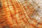 Cross-section of an tree trunk,close-up