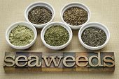 bowls of seaweed diet supplements (bladderwrack, sea lettuce, kelp powder, wakame and Irish moss) wi