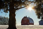 foto of dairy barn  - Big red barn framed by tree branches under a winter sunset - JPG