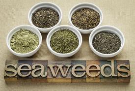 stock photo of irish moss  - bowls of seaweed diet supplements  - JPG