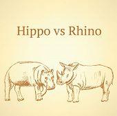 Sketch Hippo Vs Rhino, Vector Background