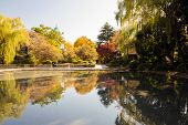 Beutiful Pond In Ueno