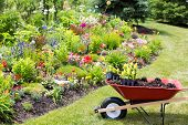 picture of manicured lawn  - Transplanting new spring plants into the garden with a wheelbarrow full of manure and celosia seedlings standing on a neat lawn alongside a newly planted colorful flowerbed - JPG
