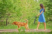 picture of dog park  - Beautiful young woman in dress is walking with dog in summer park - JPG