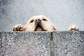 stock photo of neglect  - sad and lonely neglected dog looking over wall