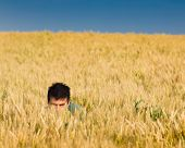 Hide And Seek In Wheat