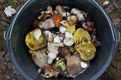 Closeup of wild mushrooms