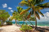 Palm beach. Palm trees on a beach, Caribbean Sea