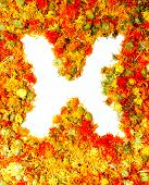 Flowers letter X.