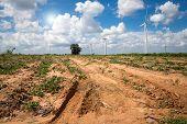 picture of cassava  - Wind Turbine for alternative energy on background sky on Cassava plantation - JPG