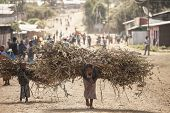 OROMIA, ETHIOPIA: NOVEMBER 7, 2014- Unidentified woman and child carry heavy loads of branches in Oromia, Ethiopia