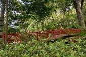 Bridge in the Monte Palace Tropical Garden