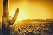 Epic desert sunset over valley of the Sun, Phoenix, Scottsdale, Arizona with Saguaro cactus in foreground.  Plenty of space for copy, banner text..