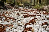 River floor with white stones