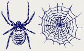 image of cobweb  - Spider and cobweb - JPG