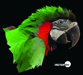image of green-winged macaw  - colorful  macaw parrot head on black background - JPG