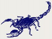 picture of scorpion  - Emperor Scorpion Doodle style - JPG