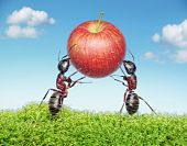 Two Ants Holding  Apple