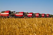 foto of combine  - Combine harvesters in a wheat field ready for harvest - JPG
