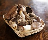 picture of exotic_food  - basket of exotic gourmet mushrooms - JPG
