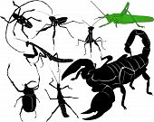 picture of scorpion  - insect collection scorpion beetles living stick mantis - JPG