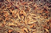 foto of dry grass  - Forest cover with fallen brown leaf on dried grass - JPG