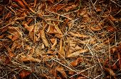image of dry grass  - Forest cover with fallen brown leaf on dried grass - JPG