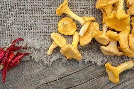 picture of chanterelle mushroom  - Cantharellus cibarius commonly known as the chanterelle golden chanterelle or girolle is a fungus - JPG