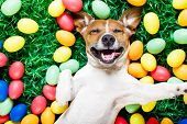 Easter Bunny Dog With Eggs Selfie poster