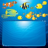 Sea Life scene with variety tropical Fishes and space for your text or design