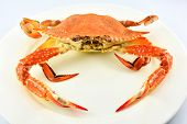 Steam Crab Isolated On White Background Cooked Crab Steamed Seafood On White Plate Ready To Serve Bl poster