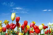 Verschillende Lentebloemen naar de blauwe hemel