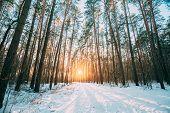 Beautiful Sunset Sunrise Sun Sunshine In Sunny Winter Snowy Coniferous Forest. Sunlight Through Wood poster