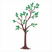Tree With Color Green Leaves. Tree Icon Isolated On White Background. Tree Icon Simple Sign. Tree Ic poster