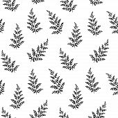 Hand Drawn Fern Leaves. Vector Seamless Minimalistic Pattern. Botany Texture For Wallpaper, Pattern  poster