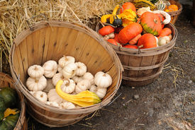 stock photo of cucurbitaceous  - Baskets of gourds surround bales of hay at a New England family farm roadside stand - JPG