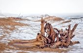 pic of driftwood fence  - Driftwood Ashore at Minnesota Point Lake Superior - JPG